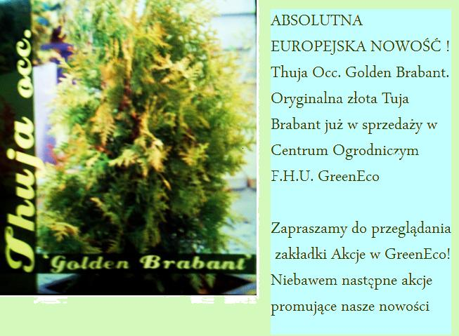 Thuja occ. Golden Brabant